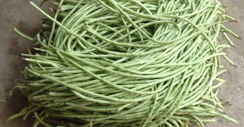 snake-beans